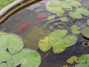 Fontana con i pesci